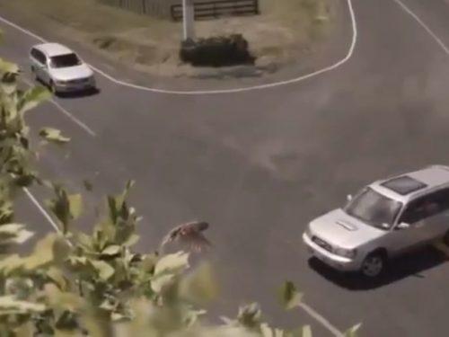 Video DvdiV – Spot , della Nuova Zelanda – Incidenti Stradali