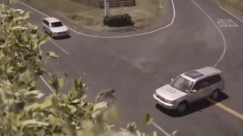 Nuova Zelanda - Incidenti Stradali