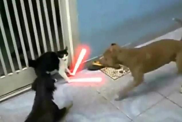 Animali , Scontro Epico gatto Jedi