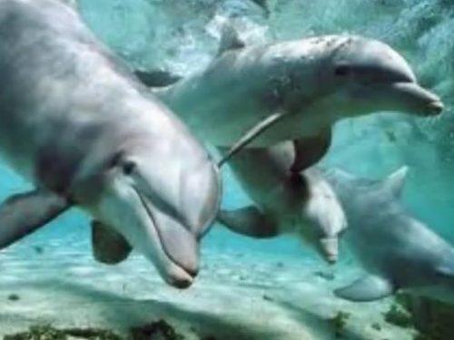 Video DvdiV – Animal , i 10 piu' Intelligenti nel Regno Animale