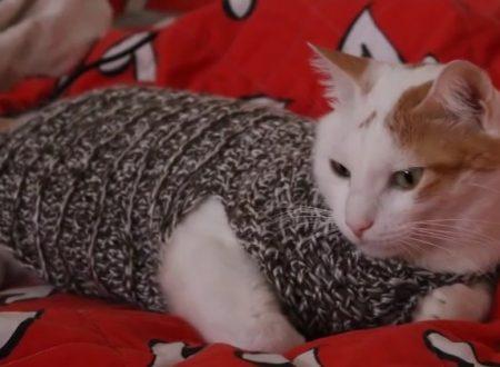 Video DvdiV – Uncinetto , come fare un Comodo Maglioncino per Gatti