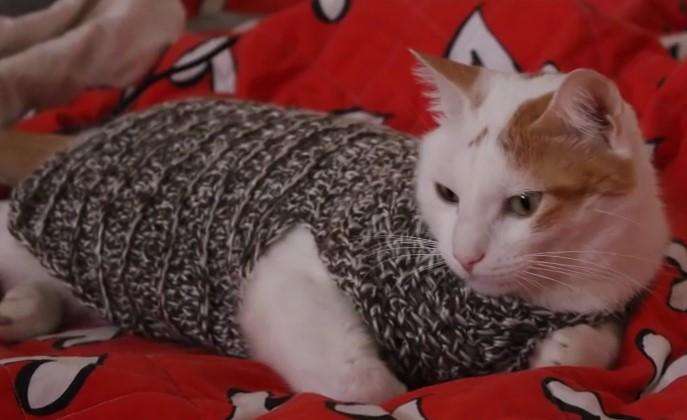 Uncinetto , come fare un Comodo Maglioncino per il Gatto