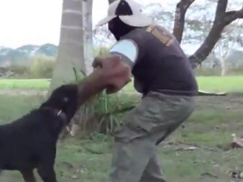 Video DvdiV – Animal , eccoti la Classifica dei Top 8 Dog piu' Pericolosi