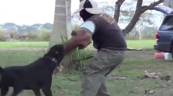 Animal , eccoti la Classifica dei Top 8 Dog piu' Pericolosi