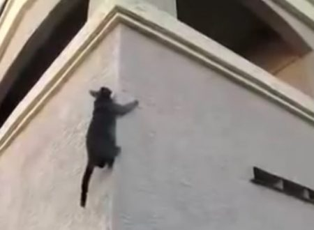Video  DvdiV –  Animal ,  vediamo ora dei  Gatti  Acrobatici Incredibili