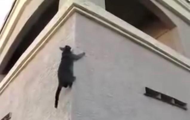 Animal , vediamo ora dei Gatti Acrobatici Incredibili