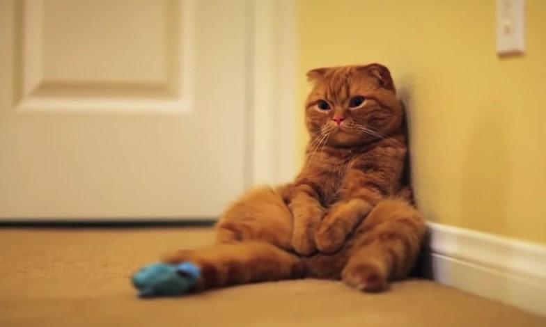 Info , vediamo la Classifica dei 10 Gatti piu' Costosi