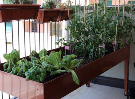 Video DvdiV – Info , Benessere & Benefici con un Orto sul Balcone