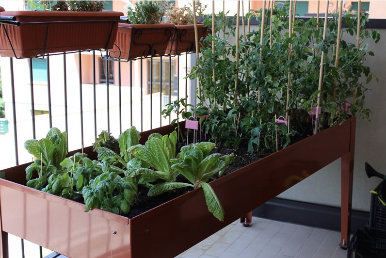 Info , Benessere & Benefici con un Orto sul Balcone